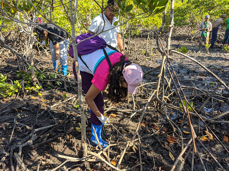 Leaf It to the Mangroves